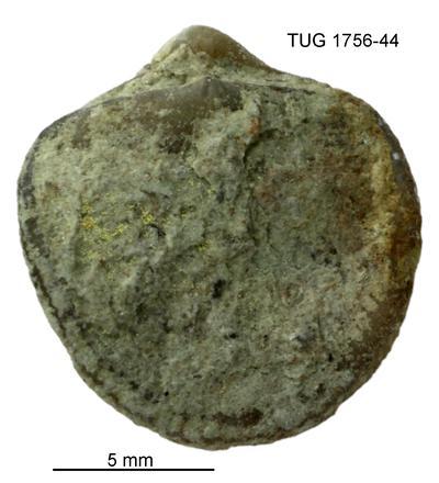None, TUG 1756-44