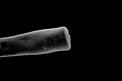 <i><i>Conochitina claviformis</i> | Conochitina sp. aff. claviformis</i><br />Ikla borehole, 212.40 m, Jaagarahu Stage ( 754-631)