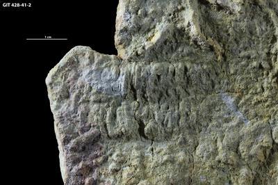 Cruziana isp., GIT 428-40-2