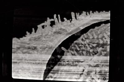 <i><i>Angochitina elongata</i> | Angochitina cf. elongata</i><br />Kolka 54 borehole, 303.80 m, Paadla Stage ( 754-732)
