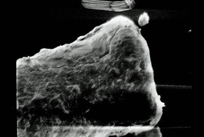 <i><i>Conochitina claviformis</i></i><br />Varbla 502 borehole, 97.20 m, Jaani Stage ( 754-95)