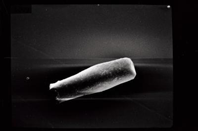 <i><i>Conochitina proboscifera</i> | Conochitina aff. proboscifera</i><br />Ruhnu 500 borehole, 489.45 m, Raikküla Stage ( 754-202)
