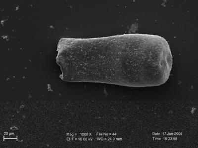 <i><i>Eisenackitina clunensis</i>   Eisenackitina aff. clunensis</i><br />Pavilosta 51 borehole, 783.00 m, Paadla Stage ( 754-249)