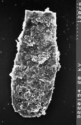 <i><i>Chitinozoa</i></i><br />Albrunnabrottet section,  m, Tremadocian ( 1527-24)
