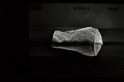 <i><i>Linochitina</i>   Linochitina sp.</i><br />Ruhnu 500 borehole, 349.30 m, Jaagarahu Stage ( 754-540)
