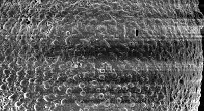 <i><i>Eisenackitina dolioliformis</i></i><br />Pulli 2 borehole, 59.80 m, Adavere Stage ( 272-170)