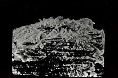 <i><i>Angochitina elongata</i> | Angochitina cf. elongata</i><br />Kolka 54 borehole, 303.80 m, Paadla Stage ( 754-733)