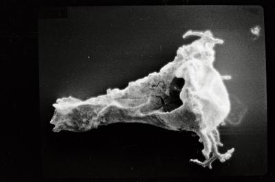 <i><i>Ancyrochitina ancyrea</i> | Ancyrochitina cf. ancyrea</i><br />Ohesaare borehole, 166.90 m, Jaagarahu Stage ( 754-213)