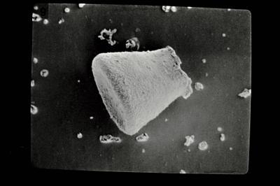 <i><i>Eisenackitina lagenomorpha</i></i><br />Pavilosta 51 borehole, 564.40 m, Kaugatuma Stage ( 754-612)
