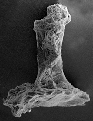 <i><i>Chitinozoa</i> | Clathrochitina? sp.</i><br />Ohesaare borehole, 163.60 m, Jaagarahu Stage ( 272-61)