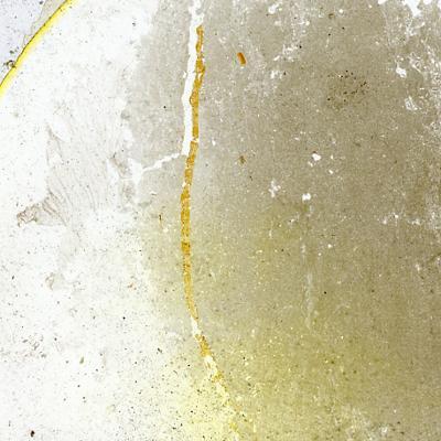 Dartmuthia gemmifera Patten, 1931, TUG 267-67