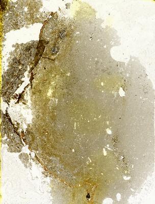 Dartmuthia gemmifera Patten, 1931, TUG 267-62