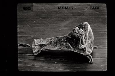 <i><i>Ancyrochitina ancyrea</i> | Ancyrochitina cf. ancyrea</i><br />Varbla 502 borehole, 121.40 m, Jaani Stage ( 754-532)