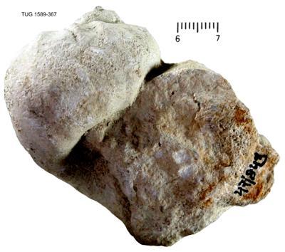 Eogastropoda