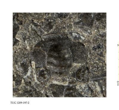 Peltura sp., TUG 1209-197-2