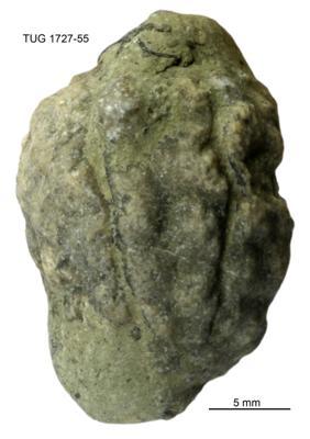 Protocrinitidae