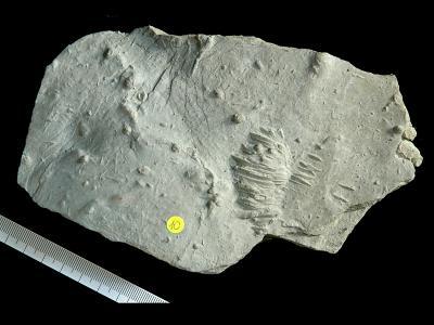 Soft-sediment trace fossils