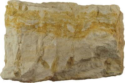 Skolithos linearis (Haldeman, 1840), TUG 1588-30