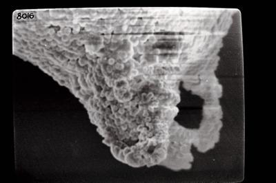 <i><i>Ancyrochitina gutnica</i></i><br />Ohesaare borehole, 266.50 m, Jaagarahu Stage ( 754-498)