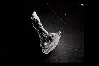 <i><i>Ancyrochitina ancyrea</i></i><br />Varbla 502 borehole, 124.70 m, Jaani Stage ( 754-511)