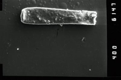<i><i>Conochitina claviformis</i></i><br />Ventspils D-3 borehole, 655.00 m, Ludlow ( 754-954)