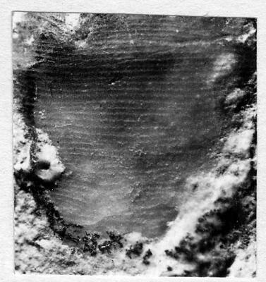 Actinoceratoidea
