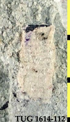 Textulariina