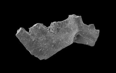 Wurmiella excavata (Branson et Mehl, 1933), GIT 598-10