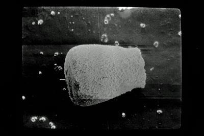 <i><i>Eisenackitina lagenomorpha</i></i><br />Ohesaare borehole, 89.30 m, Paadla Stage ( 754-594)