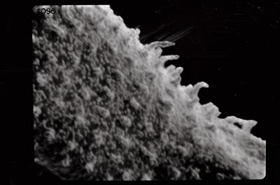 <i><i>Angochitina longicollis</i></i><br />Ruhnu 500 borehole, 456.15 m, Jaani Stage ( 220-7)
