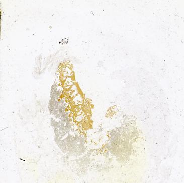 Dartmuthia gemmifera Patten, 1931, TUG 267-71