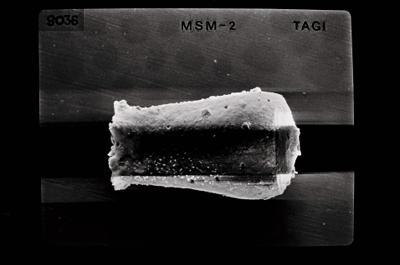 <i><i>Linochitina</i> | Linochitina sp. sp.</i><br />Kolka 54 borehole, 402.80 m, Jaagarahu Stage ( 754-645)
