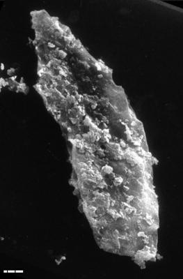 Leiosphaeridia tenuissima Eisenack, 1958, TUG 1545-16