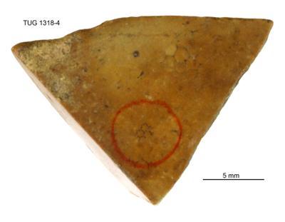 Cyclocrinites spasskii Eichwald em. Stolley, TUG 1318-4