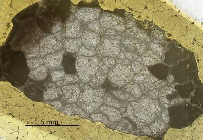 Paleofavosites alveolaris (Goldfuss, 1829), GIT 180-49