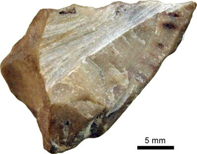 Solenopora spongoides Dybowski, TUG 1140-10