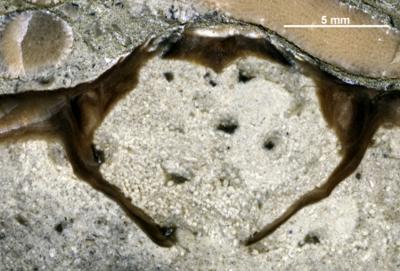 Coprolites