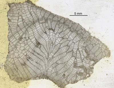 Favosites forbesi Milne-Edwards et Haime, 1851, GIT 90-32