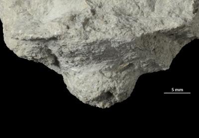 Amphorichnus isp., GIT 156-1316