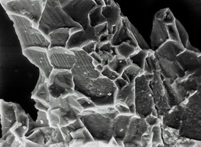 Ozarkodina excavata puskuensis Männik, 1994, GIT 254-48